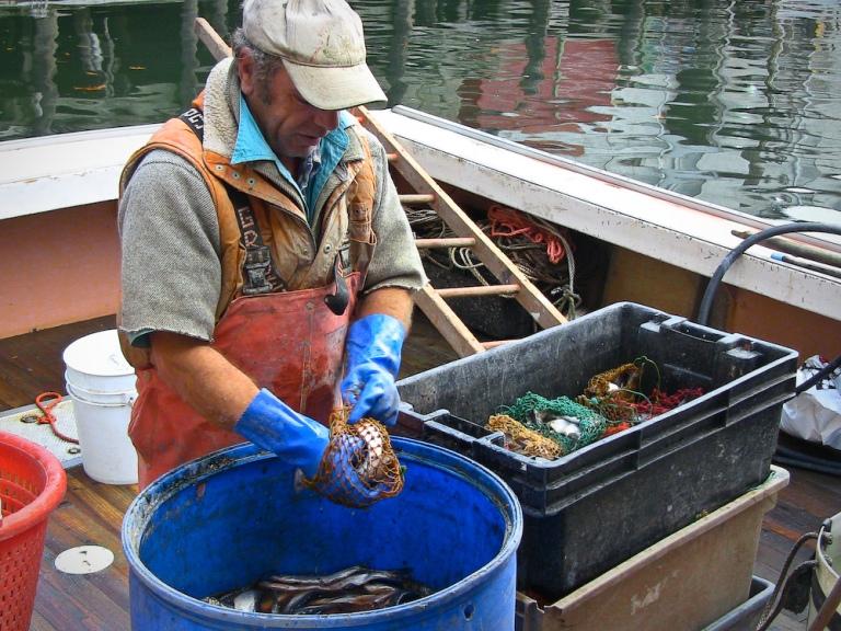 lobster lobsterman photography maine portland coast warf bait fishing trap photo
