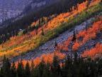 Montana Foliage!