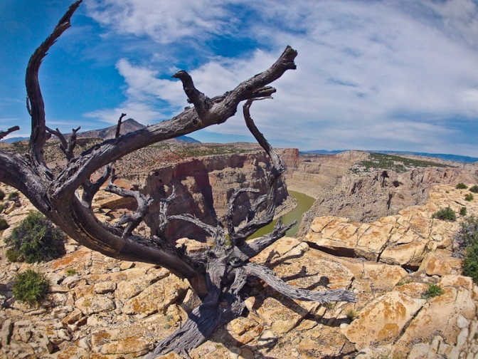 big horn canyon national recreation area juniper tree desert landscape