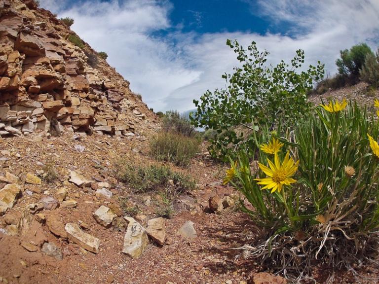 big horn canyon wyoming montana lovell desert landscape flower national recreation area