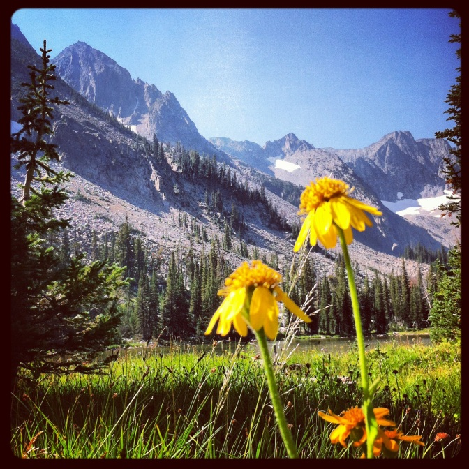Wildflowers, Crazy Mountains, Big Timber, MT