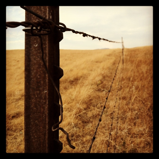 Barbed-wire fence, somewhere in Montana