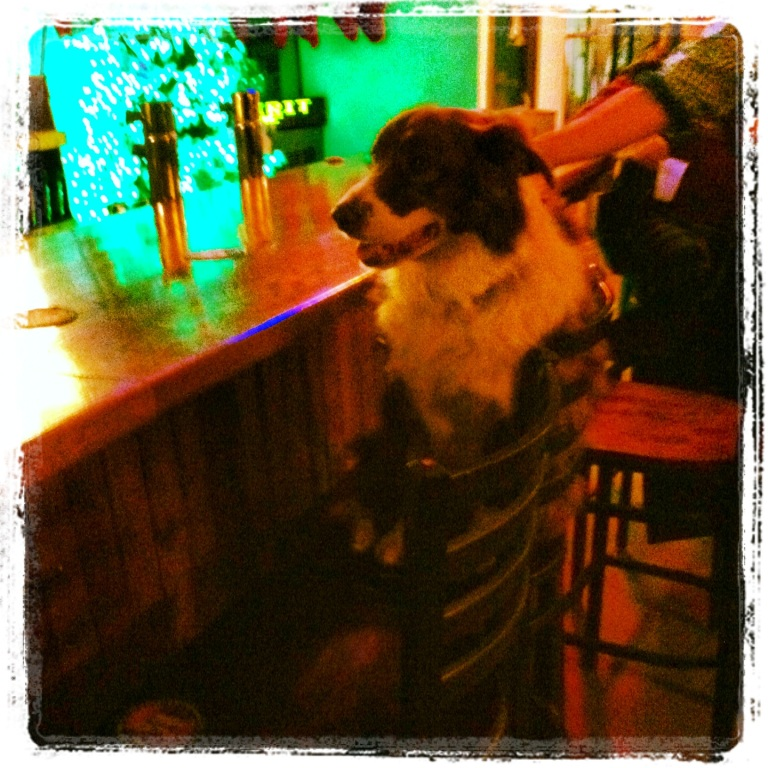 Dog at a bar in Billings, MT. They said he's a regular.