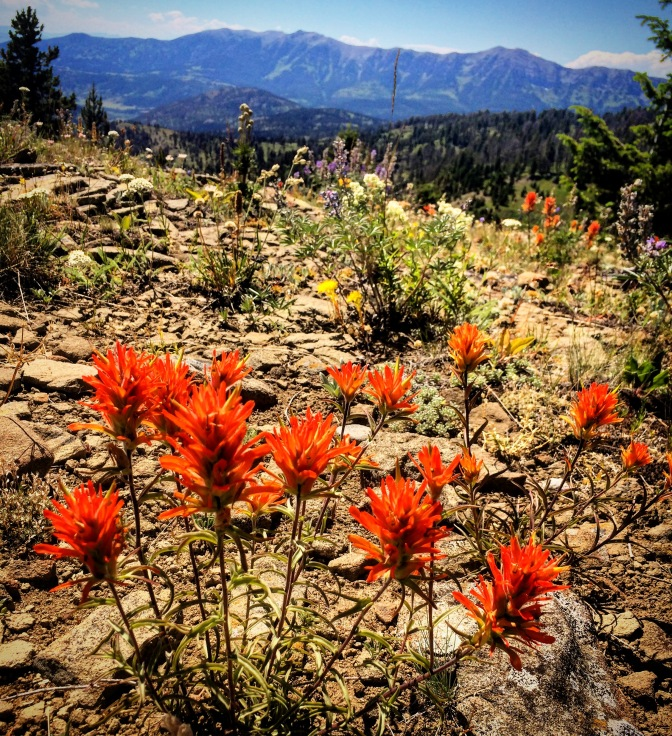 bozeman, montana, bangtail mountains, trail, indian paintbrush, wildflowers